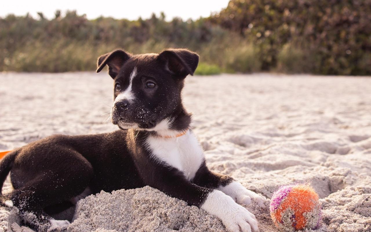 cours education chien 22