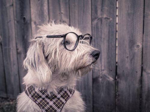 Therapie comportemental chien