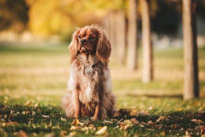 educateur-dresseur-chien-article-2