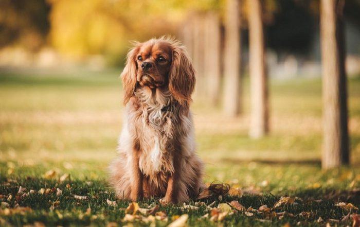 educateur dresseur chien article 2