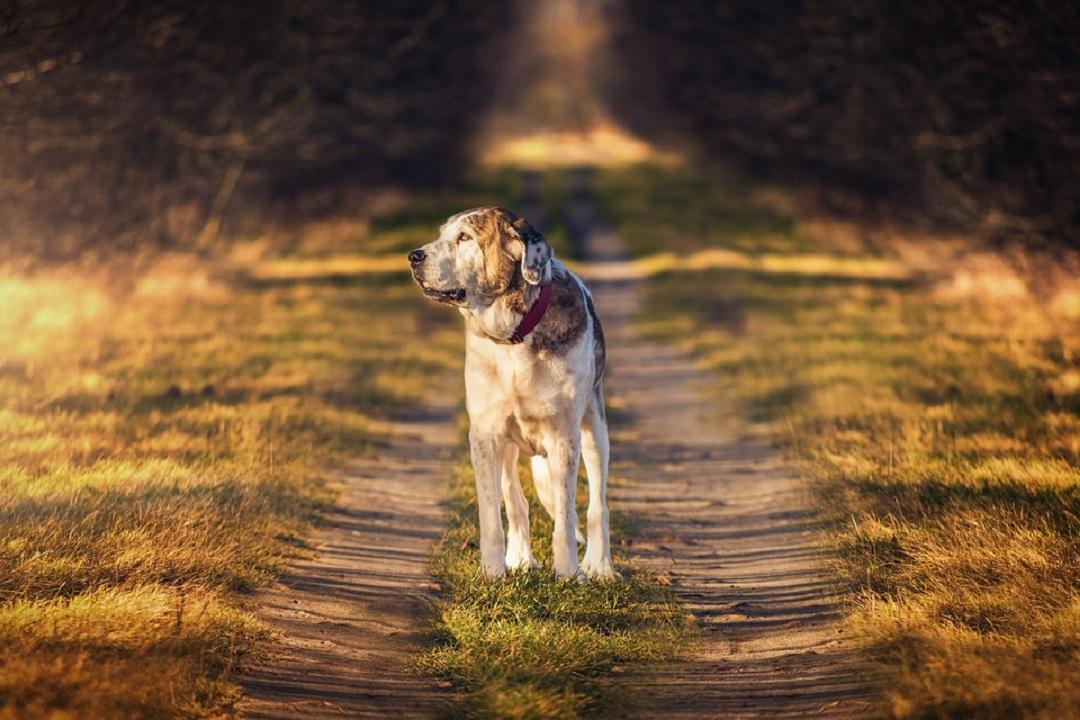 apprendre un tour à son chien